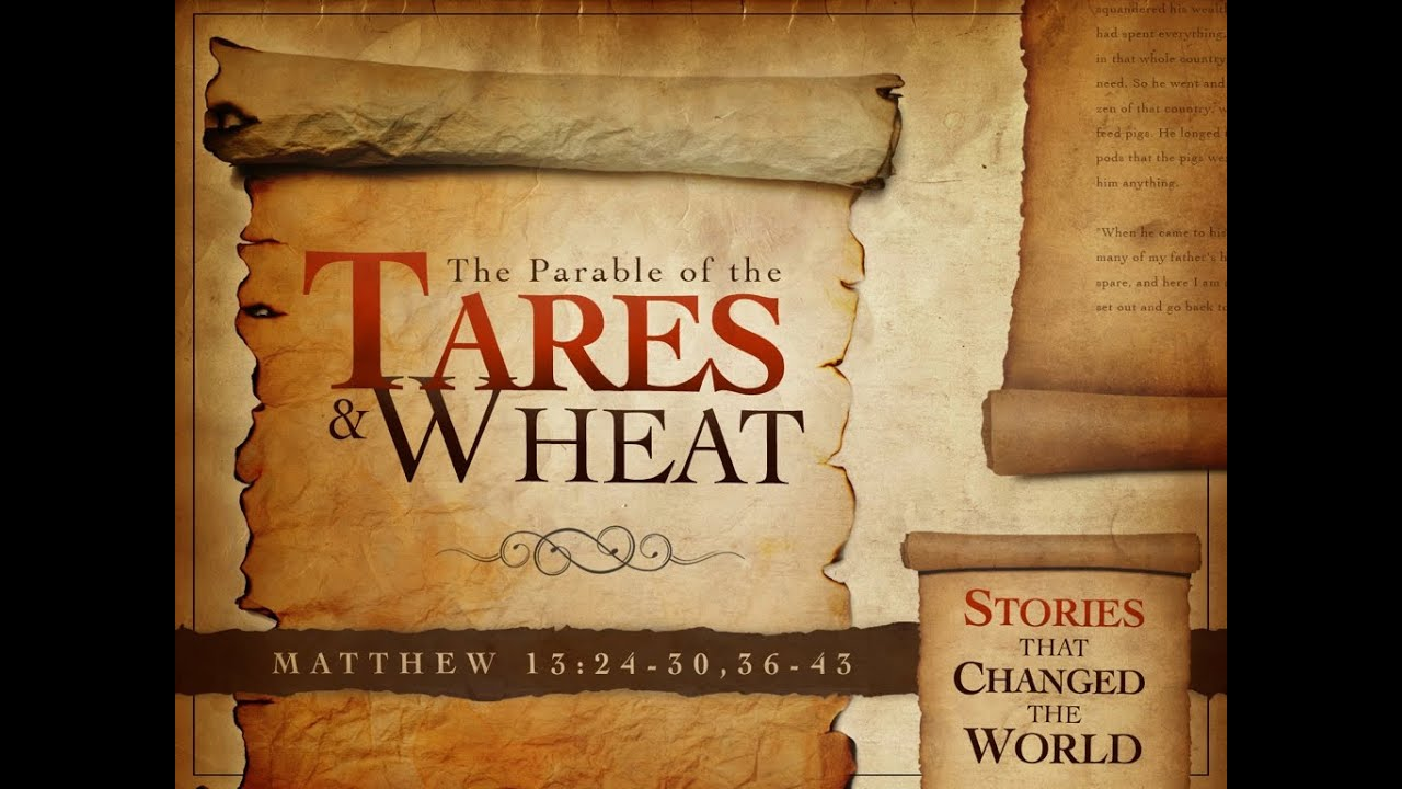 Wheat Parte Se Tares 1