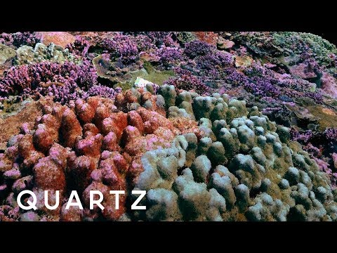 3D photogrammetry maps of coral reefs