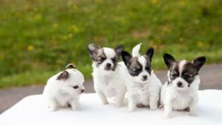 Dos And Donts On How To Start Training Puppies