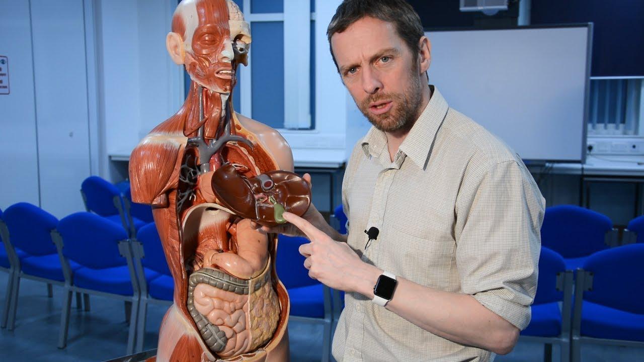 Gallbladder And Biliary Tree Anatomy Gallstones Youtube