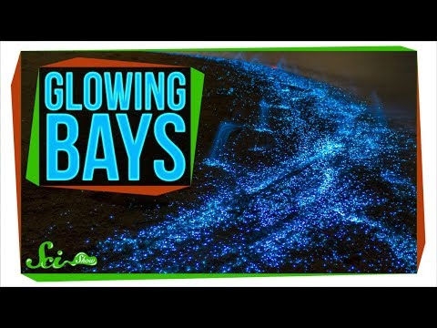 The Secret Behind Bioluminescent Bays
