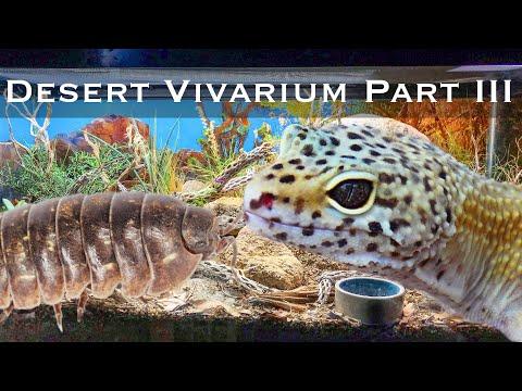 Bioactive and Enriched Desert Vivarium Part III: Plants and Clean-up Crew Updates
