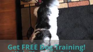 Train Pet Dog To Look Cute | Honest Fred's Pet Products