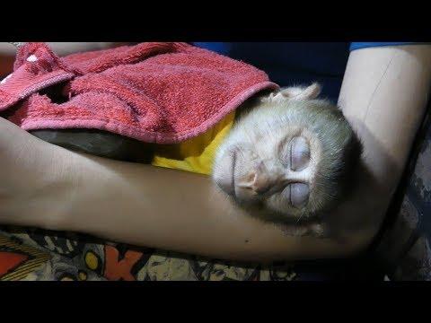Baby Dodo Not Allow Mom Go Far From Him While He Feel Sleepy, Dodo Need Warm From Mom
