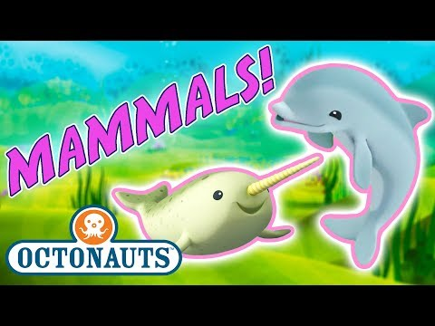 Octonauts - Learn about Marine Mammals | Cartoons for Kids | Underwater Sea Education
