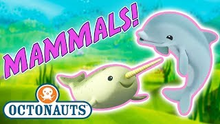 Octonauts - Learn about Marine Mammals   Cartoons for Kids   Underwater Sea Education