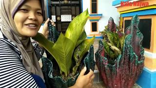 Cara Membuat Pot Bunga Cantik Dari Handuk Bekas