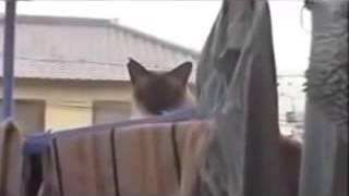 CAT FALLING OFF ROOF HALARIOUS ☺😊😀
