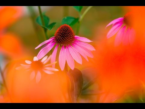 CREATIVE FLOWER PHOTOGRAPHY TIPS - Using Shallow Depth Of Field