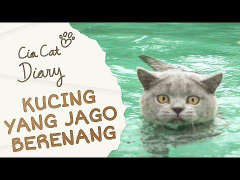 Cia Cat Diary - Ep 15 - Kucing Jago Berenang