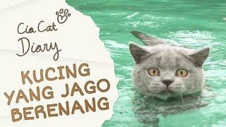 Kucing Jago Berenang   Cia Cat Diary   Ep 15