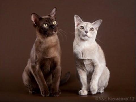 Снупи: самый милый кот в мире - YouTube