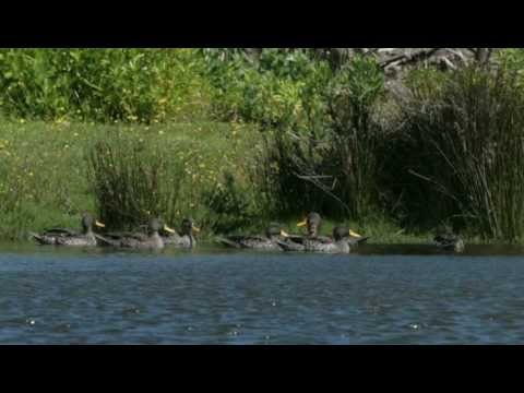 Rondevlei Bird Sanctuary