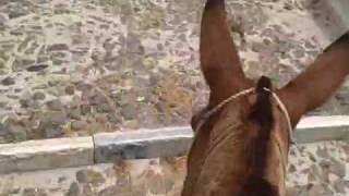 Hungry Donkey - Santorini