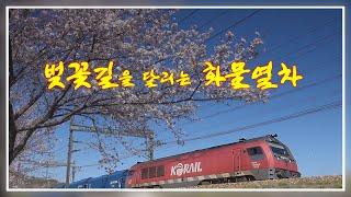 [철도영상] 벚꽃길을 달리는 화물 열차들-호남선 계룡역…