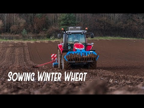 Sowing Winter Wheat - McCracken