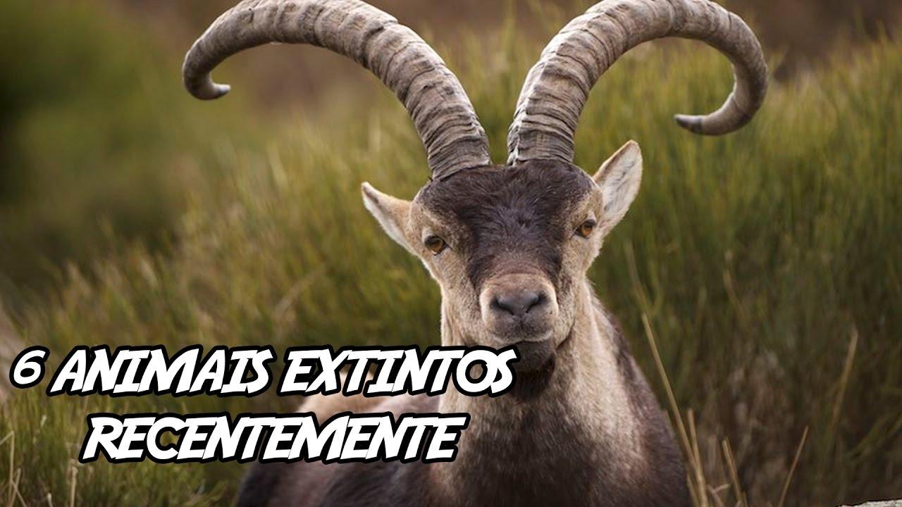 6 Animais Extintos Recentemente Youtube