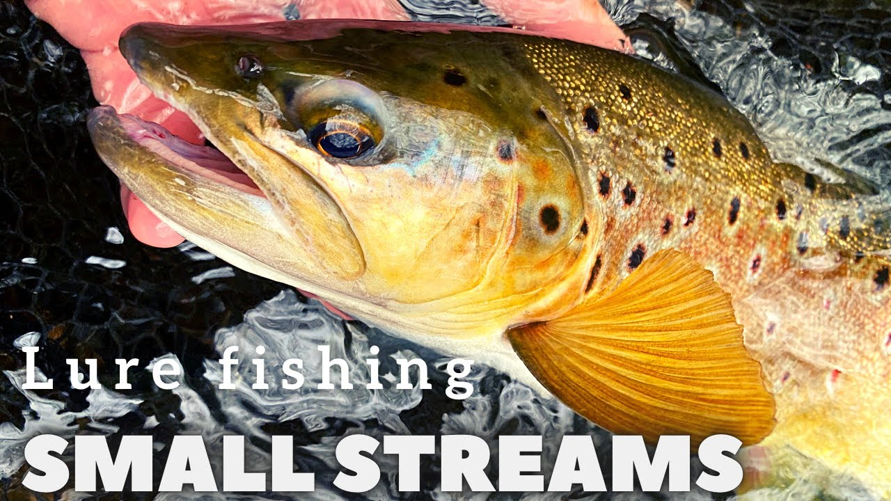Small streams - trout lure fishing