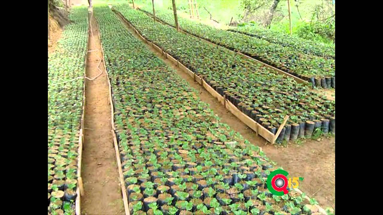 Construiran vivero para 200 mil plantas de youtube for Viveros de plantas en renca
