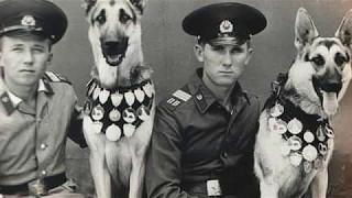 С праздником Погранцы  Пограничные собаки.