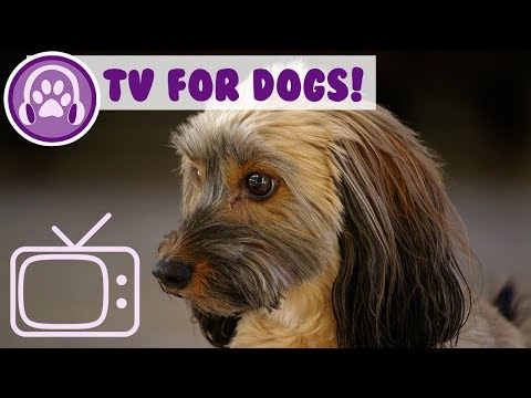 Dog TV! Reduce Anxiety and Entertain Your Dog with Fun TV and Music!