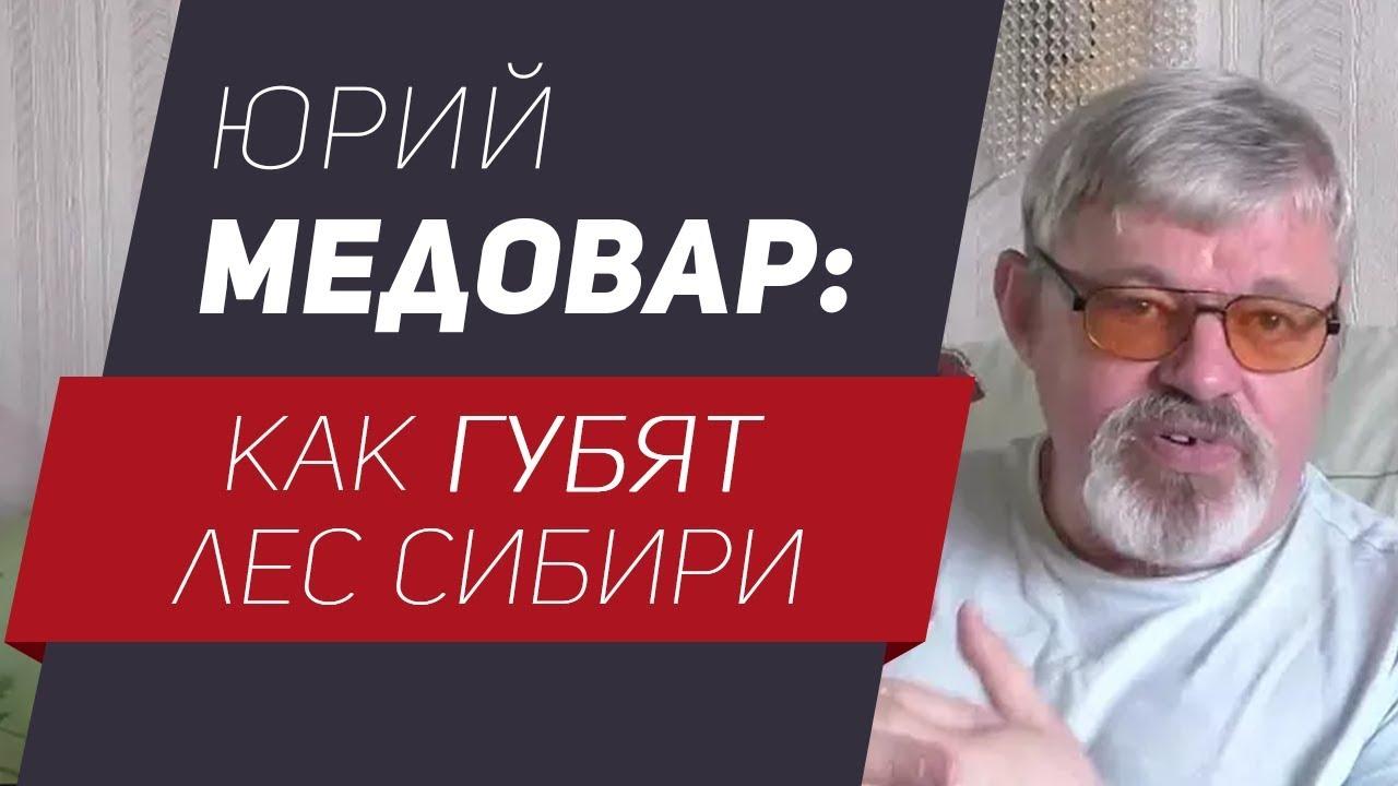 Юрий Медовар: как губят лес Сибири
