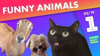Funny Animals Compilation of the week 🐶😻 - February 2019, #1 | Cool Funny Videos