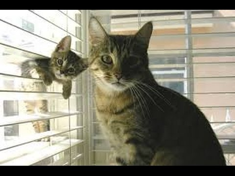 Cats Playing With Kittens Compilation 2014 [NEW]