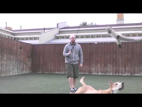 Using A Flirt Pole With Your Dog