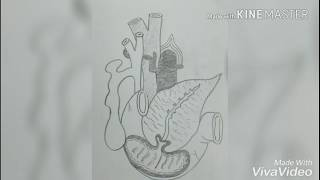 Easy way to draw pancreas,easiest way to draw pancreas,how to draw pancreas ,sneh education