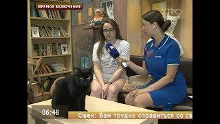 Чёрный кот приносит удачу: приметы и суеверия пятницы 13-ое