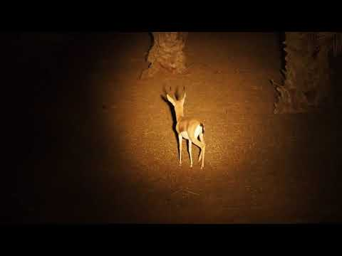 Night Safari through Dubai Desert Conservation Reserve with Arabian Adventures