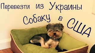 №1 Как перевезти собаку в США (из Украины)(, 2015-07-12T07:26:24.000Z)