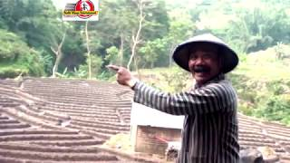 Download lagu CUL PODO MACUL(TETANEN) MITLE KENO GUDO#MAK NYUS DI DENGERIN SAMBIL NGOPI