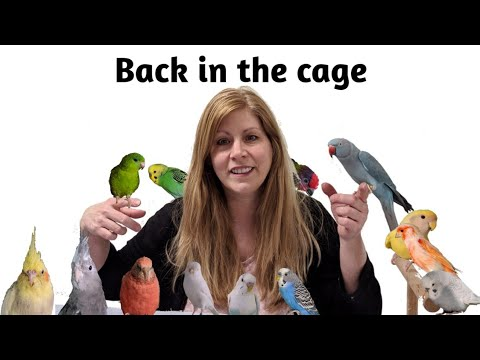 Tips On How To Get Your Bird Back In Its Cage