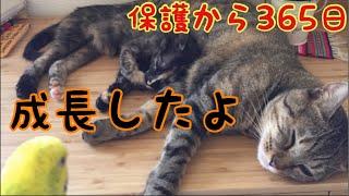 88グラムで保護した子猫1年の軌跡 【成長まとめ】Growth record of a rescued kitten with only 88grams