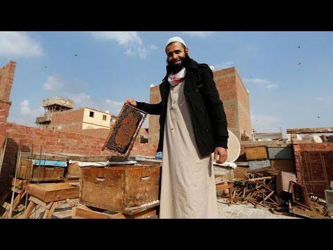 شاهد: عمر أبو الحسن مصري يربي النحل لسمّه لا لعسله  - نشر قبل 2 ساعة
