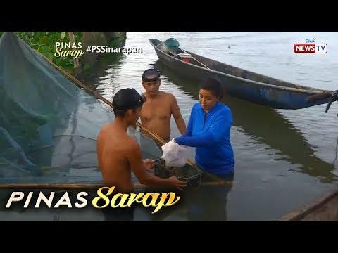 Pinas Sarap: Kara David, humuli ng Sinarapan sa Lake Buhi