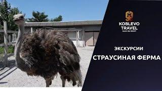 Коблево Видео Страусовая ферма Экскурсия
