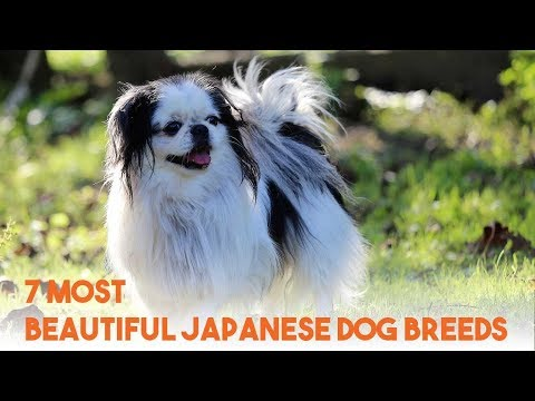 7 Awesome Japanese Dog Breeds