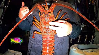 How To Catch GIĄNT LOBSTER (Catch Clean Cook) TIPS & TRICKS