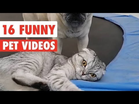 ADORABLE PETS DOING FUNNY THINGS ( CATS AND DOGS)🤣💕