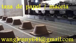 taza de papel / maceta-whatsapp:0086-15153504975
