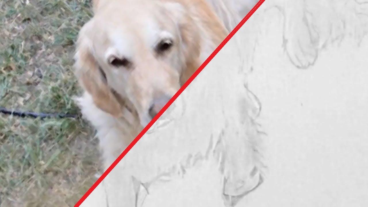 hund zeichnen im zeitraffer 02 dog drawing in fast. Black Bedroom Furniture Sets. Home Design Ideas