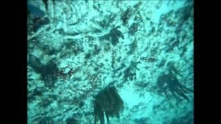 cozumel playa del carmen mexico akumal bay resort sea turtle snorkel