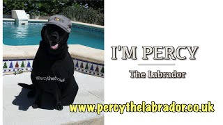 Percy the Labrador Merchandise at Teespring.com
