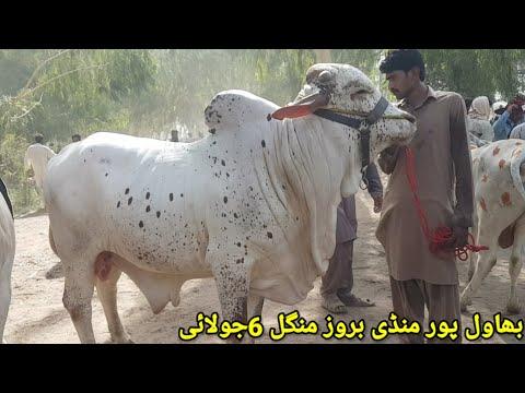 Bahawalpur cow mandi| High Demand| More Animals|06/07/2021|