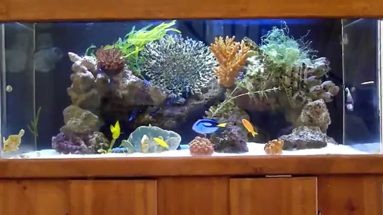 Wide 100 gallons saltwater marine fowlr aquarium with for Aquarium angle