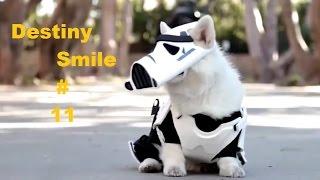 (Звездные Войны по собачьи)/Подборки приколов Выпуск №11/Funny Videos Compilation #11