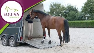 Gambar cover Verladen mit Linda Weritz - das junge Pferd an den Hänger gewöhnen